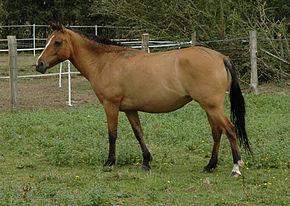 Horse 2005-08-06 (Cheval).jpg