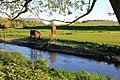 Horses at Höje Å.jpg
