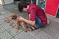 Hundefrisör dog hairdresser (25672675428).jpg