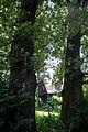 ID 1373 Quercus 0001.jpg