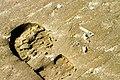 IJmuiden-beach-2013-15 (9043393293).jpg