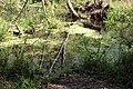Ichetucknee Springs State Park Blue Hole Spring 10.jpg