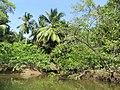 Ilha de Marajó, Brazil - Brasil, Pará (38107220955).jpg