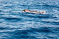 Ilha de São Miguel DSC01358 (36175007063).jpg