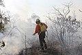 Incêndio no Parque Nacional de Brasília (36754964972).jpg