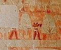Incense trees transport. Punt relief. Mortuary Temple of Hatshepsut, Deir el-Bahari.jpg