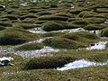 India - Ladakh - Trekking - 066 - wetlands (3896546832).jpg