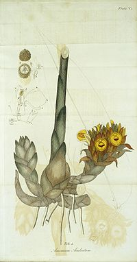 Indian Medicinal Plants and Drugs Wellcome L0032803.jpg