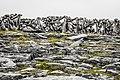 Inishmore Island 009.jpg
