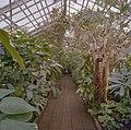 Interieur, overzicht plantenkas - Delft - 20404919 - RCE.jpg
