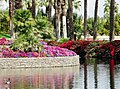 Island and Duck, Palm Desert Marriott 2-22-14 (12819632353).jpg