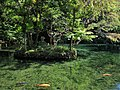 Izuruhara Benten Pond 3.jpg