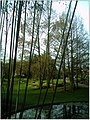 January Frost Botanic Garden Freiburg Iron Bamboo Curtain - Master Botany Photography 2014 - panoramio.jpg