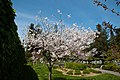 Japanese Friendship Garden (4526439041).jpg