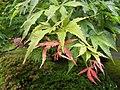 Japanese Garden (16020037196).jpg