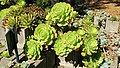 Jardín Botánico Mexico City 83.jpg