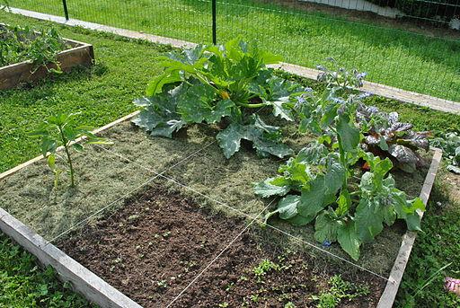 serre pour jardin potager