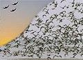 Jonathan Livingston Seagull figure.jpg