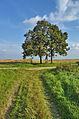 Kříž v polích jižně od obce, Nové Sady, okres Vyškov (02).jpg