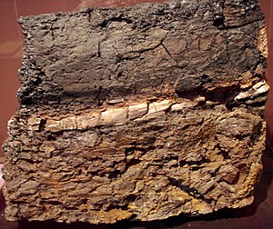 Cretaceous–Paleogene extinction event - A Wyoming rock with an intermediate claystone layer that contains 1000 times more iridium than the upper and lower layers. Picture taken at the San Diego Natural History Museum