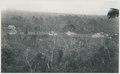 KITLV - 12615 - Kleingrothe, C.J. - Medan - Tobacco plantation Kotta-Djoeroeng at Gunungrintih in Deli - 1903.tif