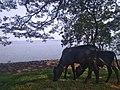 Kala Wewa of Sri Lanka.jpg
