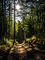 Kamchatka Forest (19536919961).jpg