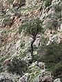 Katholikon - Schlucht Baum.jpg