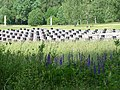 Khatyn National Memorial Complex - Near Minsk - Belarus - 08 (27547828986).jpg