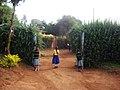 Kids at Maringa Chini Primary School, Tanzania - panoramio (1).jpg