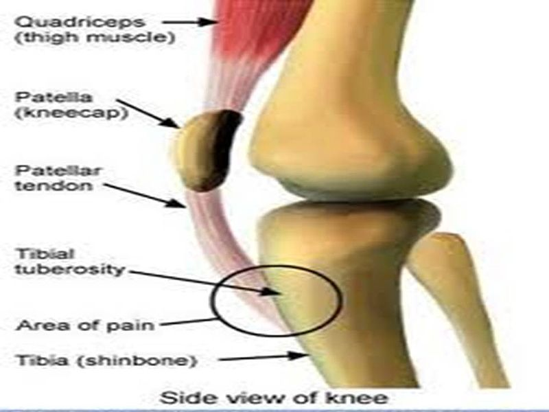 ملف:Knee anatomy.jpg