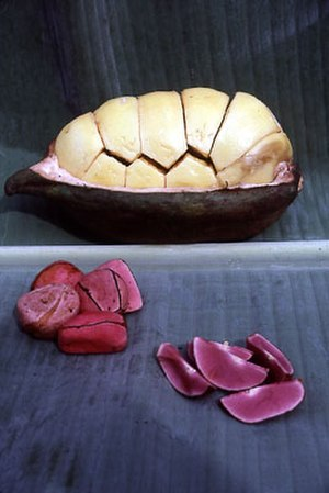 Kola nut - Kola nut – pod (with seeds inside their white testa), and seeds (whole without testa and split into cotyledons).