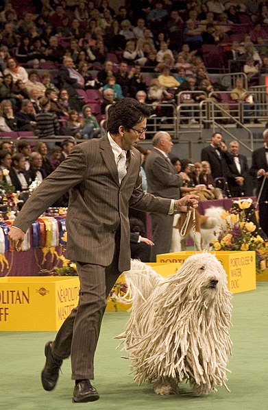 File:Komondor Westminster Dog Show.jpg
