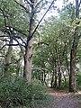 Krasne park podworski - panoramio.jpg
