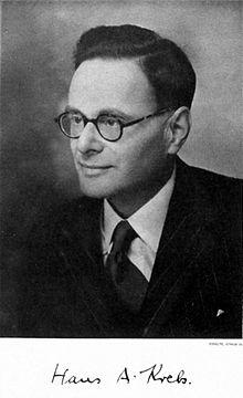 Hans Adolf Krebs, biochimico tedesco che propose gli elementi chiave del ciclo dell'acido citrico