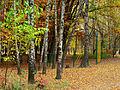 Kyiv Sovky Park25.JPG