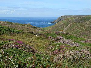 Acronicta auricoma - Habitat, England