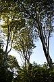 LSG Kühlung - Nienhäger Holz (Gespensterwald) - Blick nach oben (11).jpg