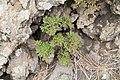 La Palma - El Paso - LP-301 - Llano del Jable 28 ies.jpg