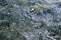 Laacher See - Gasblasen - geo.hlipp.de - 23482.jpg