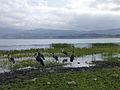 Lac Haïk-Ethiopie-Marabouts (6).jpg