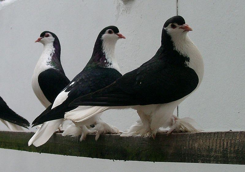 File:Lahore 1.jpg