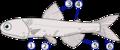 Lampanyctodes hectoris (fins).png