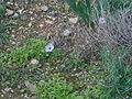 Land anemones.jpg