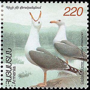 Armenian gull - Image: Larus armenicus stamp