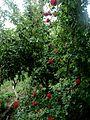 Le petit jardin 1, ArmAg.jpg