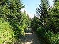 Le sentier du chard du beurre - panoramio (5).jpg