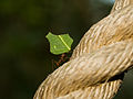 Leaf cutting ant.jpg