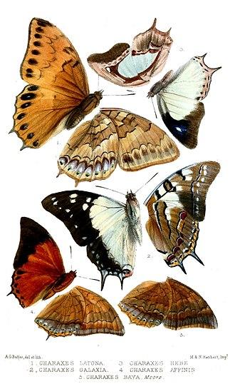 Charaxinae - Image: Lepidoptera 2Butler
