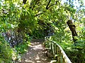 Levada do Risco, Madeira, Portugal, June-July 2011 - panoramio (27).jpg